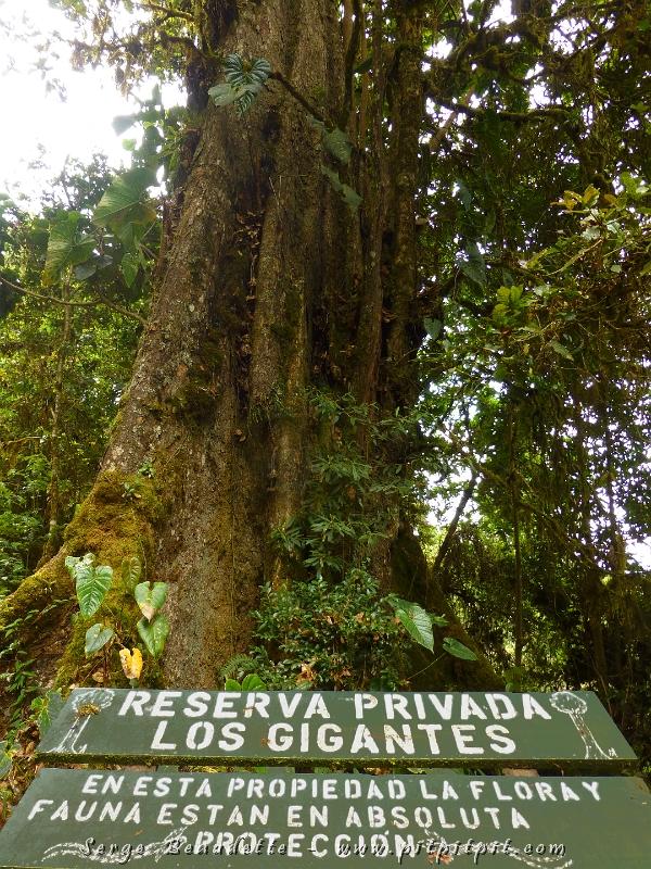 Nous allons ensuite au Paraiso de Quetzal pour notre dernier repas…Vous vous souvenez? C'est là que j'ai choisi avec déchirement d'aller voir un nid de Quetzal plutôt que la forêt aux Cyprès de montagnes millénaires? …J'ai trouvé la solution pour ne rien manquer! J'éviterai de diner (autre perte de temps!) …et je visiterai la forêt durant ce temps!