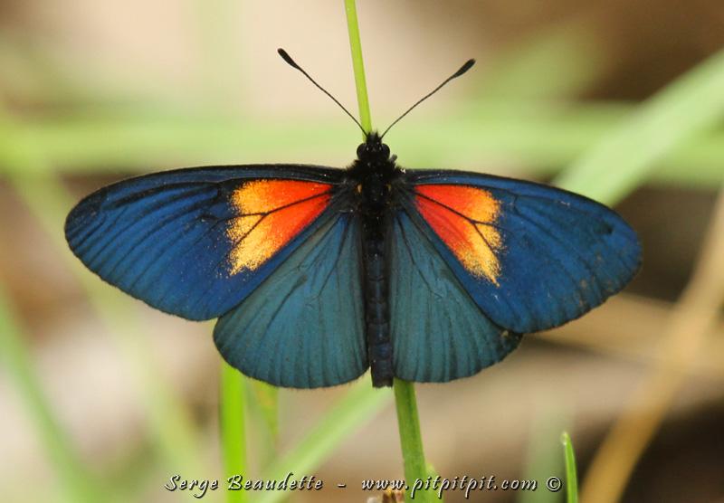 Et qui dit « fleurs » dit papillons!!! De toutes les couleurs aussi!!!