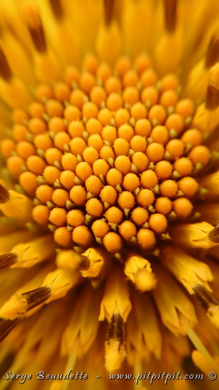 …Il y a des fleurs toutes petites aussi… mais pas moins impressionnantes pour autant!!! J'adore plonger dans le Monde, à leur échelle…