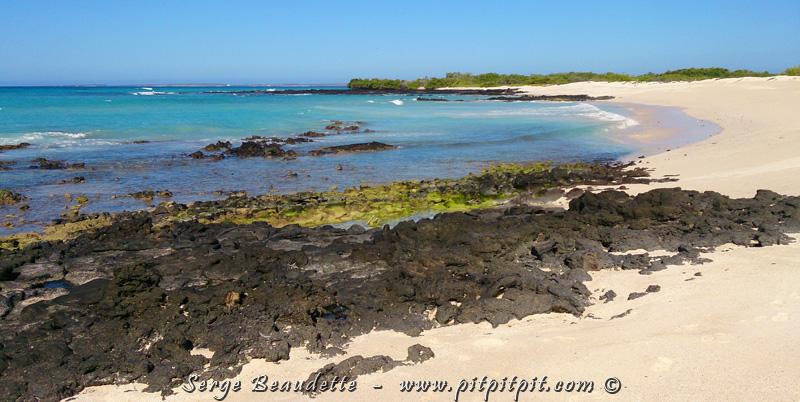Les eaux entourant les Îles Galapagos sont parmi les plus riches au Monde!!! Pourquoi? (à suivre...)