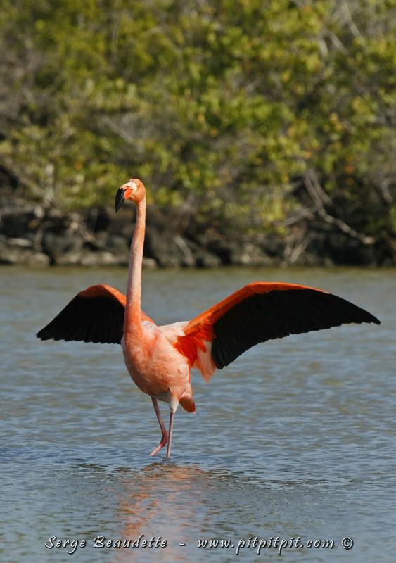Gigantesque oiseau, flamboyant, il ouvre ses ailes pour se montrer dans toute sa magnificence!!! Je suis déjà comblé et le voyage ne fait que commencer...!