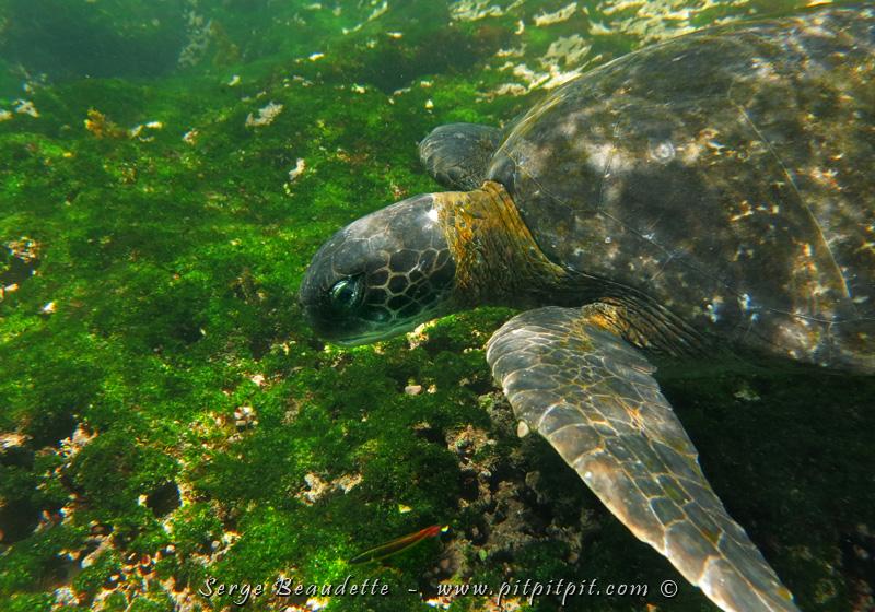 Mais souvent aussi, nous étions avec elles, sous l'eau, dans leur habitat à contempler leur élégance et leur fluidité... QUELLE CHANCE!!! Juste y penser et je deviens zen!