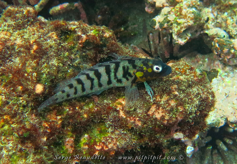 Petit poisson très mignon!!!