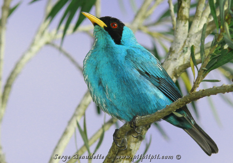 Des oiseaux de toutes les couleurs défilent sous nos yeux, très près de nous!