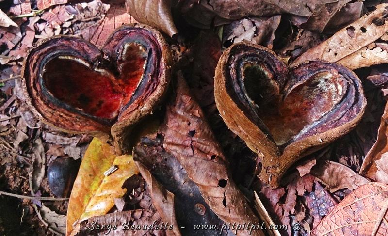 ...Et tous ces coeurs aux multiples tailles formes et provenances, offerts en grande abondance par la nature!!!