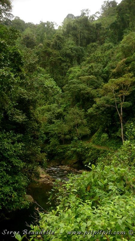 Nous faisons route vers une région très luxuriante... Une vallée riche... pour y dénicher plusieurs espèces... mais SURTOUT, pour une en particulier... LA SURPRISE du voyage!!! ...Une espèce parmi les plus SPECTACULAIRES que je connaisse... et que nous ne devions pas voir!