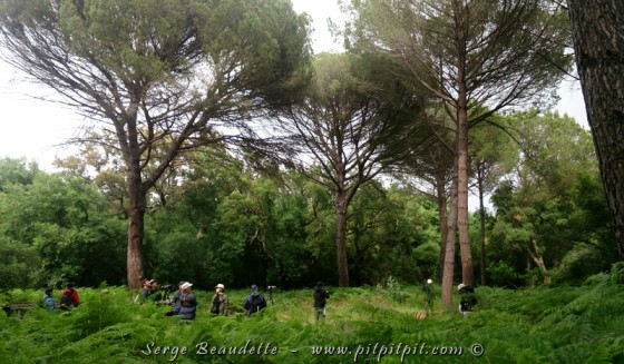 Forêt - Espagne 2016
