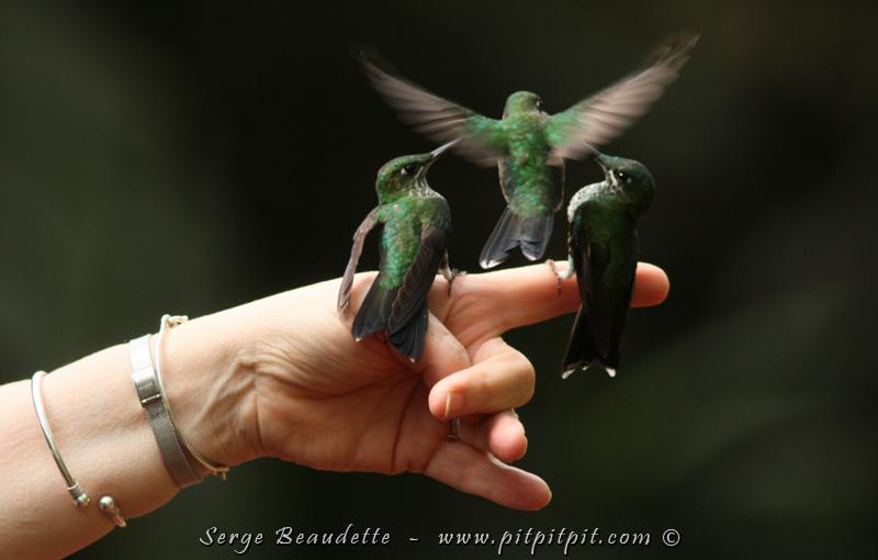 Sans nectar, les colibris se pressent sur nous, premiers visiteurs… C'est de la MAGIE!!!