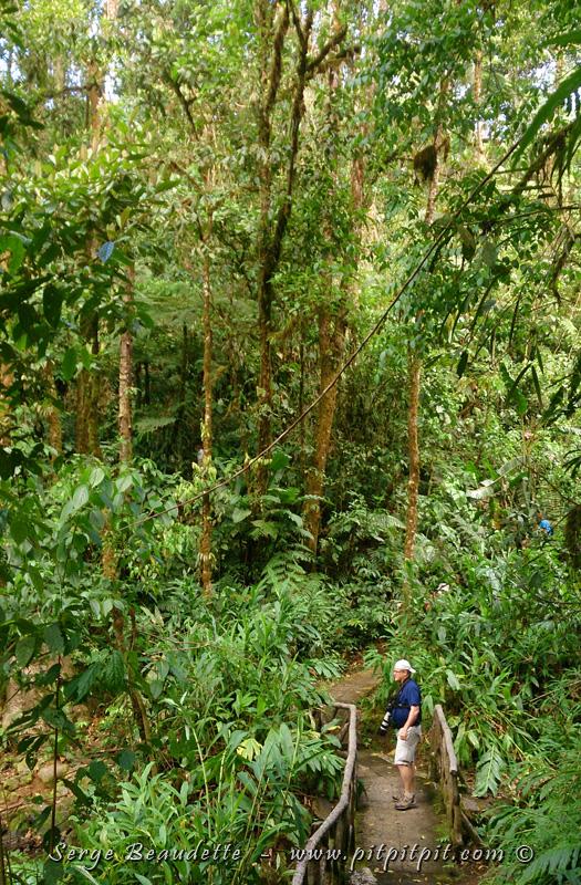 …Nous sommes déjà au cœur de la forêt luxuriante à l'extrême!!!