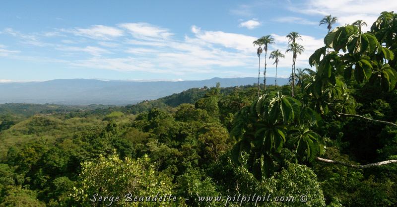 Disons qu'avec une observation de la sorte, le reste n'est que bonus! Nous reprenons la route pour nous rendre à notre prochain Lodge, en pleine station biologique, celle même qui abrite le réputé jardin Wilson, le plus grand jardin botanique d'Amérique centrale, rien de moins!