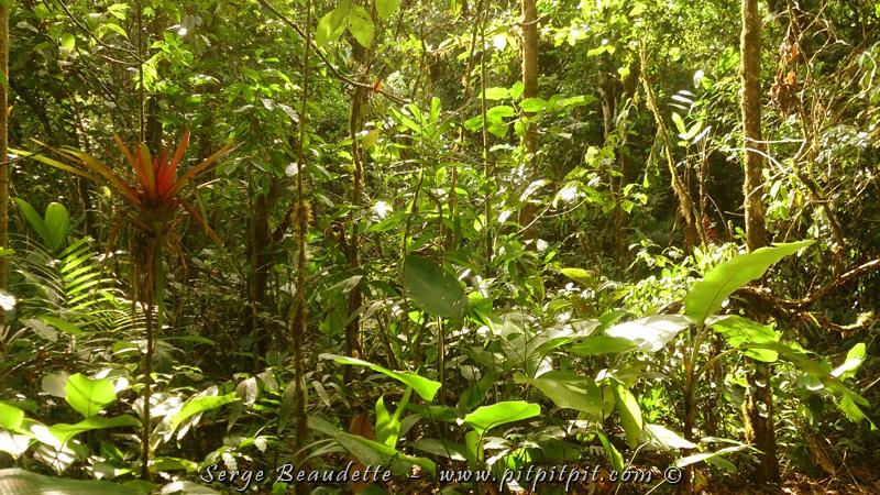 ...Il y a les arbres spéciaux, mais toute la forêt aussi ici qui est luxuriante à l'extrême!