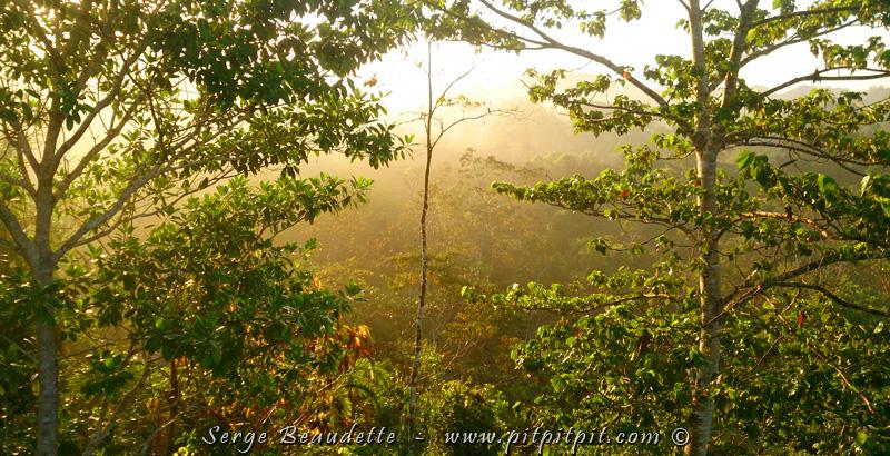 Ce matin, dans la jungle profonde, la lumière et la nature est impressionnante... touchante... émouvante. Plus que quelques heures et nous quitterons ce paradis, tout de suite après le déjeuner... Nous quitterons ce paradis... pour un AUTRE PARADIS!
