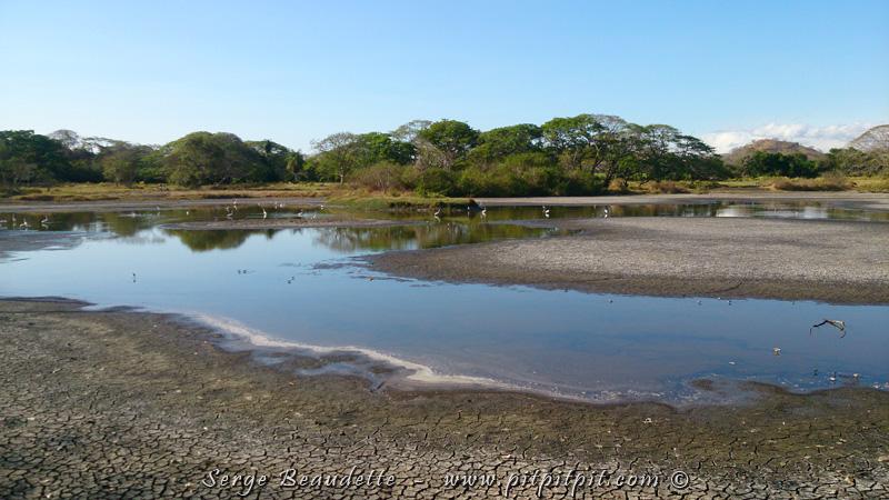 UN OASIS DANS LE DÉSERT! Sur l'énorme propriété, il y a la « Laguna », un grand point d'eau douce en pleine forêt sèche, et s'évapore de façon progressive sur les 4 mois de sécheresse de l'été Costaricien… C'est visible par les bords tous craquelés autour de l'eau… Mais tant qu'il y a de l'eau, ça représente une aubaine pour une foule d'espèces!!!