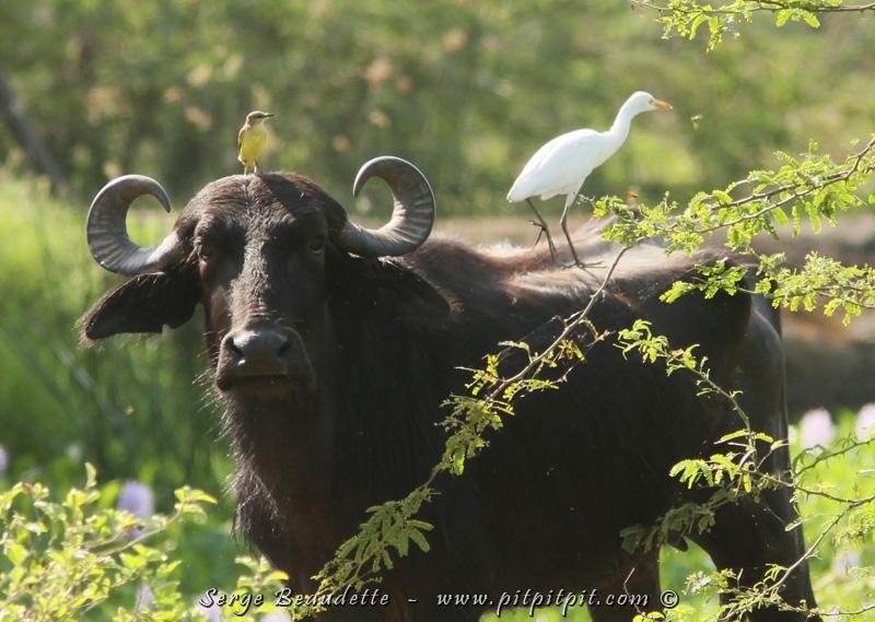 Ici, on peut facilement voir que ce sont les oiseaux qui dominent, en Colombie!!