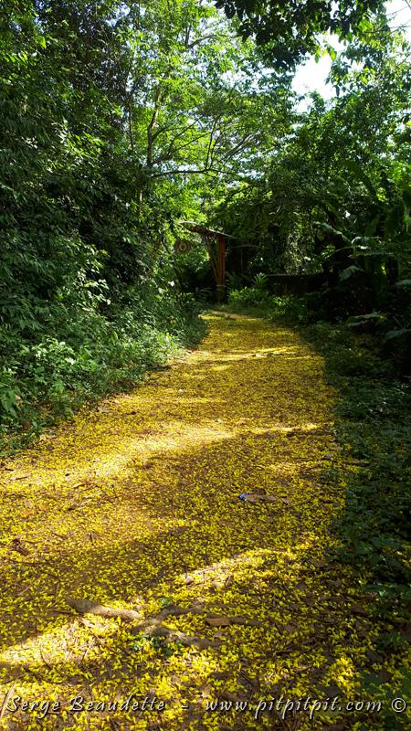 La Colombie nous déroule son tapis de fleurs, en guise de bienvenue colorée et chaleureuse!