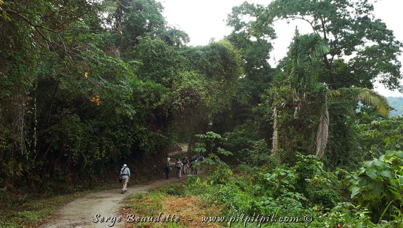 Ce sentier qui entre dans une jungle bien fournie, longe des crêtes de montagnes, nous permettant d'observer de nouvelles espèces et de voir le Ara militaire, que vous pourrez admirer à la prochaine photo.