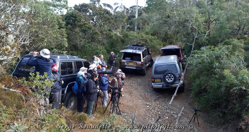 Nous montons jusqu'à ce que la route s'arrête, où nous verrons de très nombreuses espèces endémiques!!