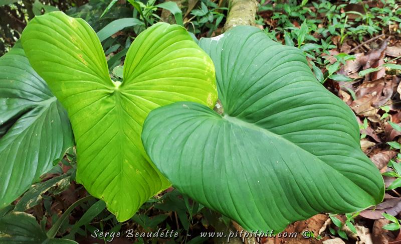 ...Je termine en partageant cette grande manifestation de l'amour, présent même dans les plantes!