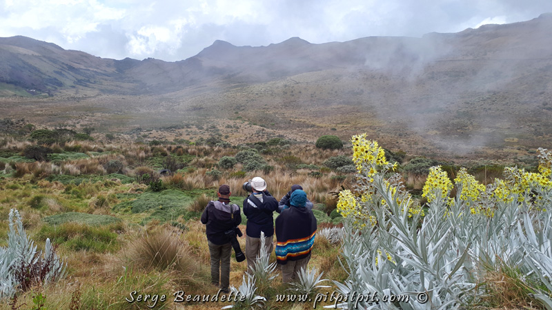 On est dans un habitat qui s'appelle le paramo, à un peu moins de 5 000 mètres d'altitude.
