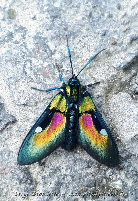 Je vous laisse avec ce petit papillon tout aussi coloré... La nature fait des merveilles...