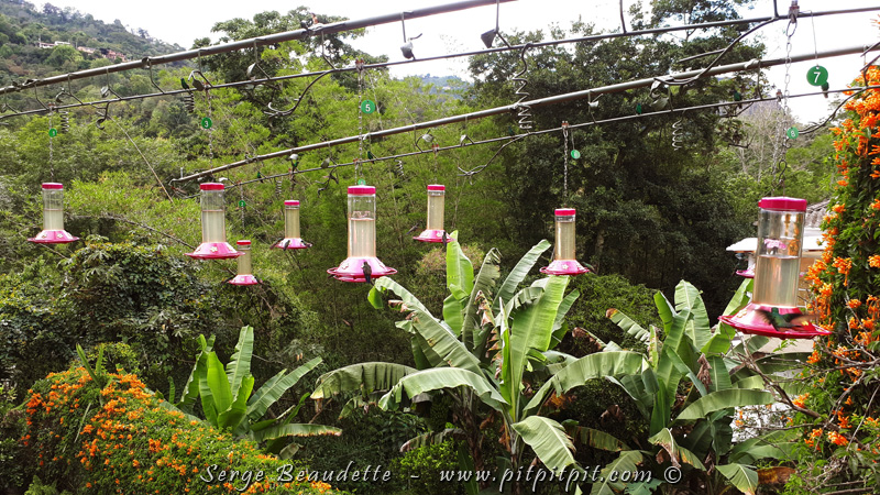 Ce site est situé en pleine ville, on y trouve un super beau jardin, très attirant pour les colibris...